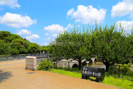 武蔵国分寺公園の写真素材 [FYI01751848]