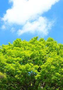 青空と新緑の写真素材 [FYI01751851]