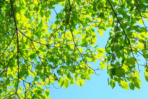 青空と新緑の写真素材 [FYI01751903]