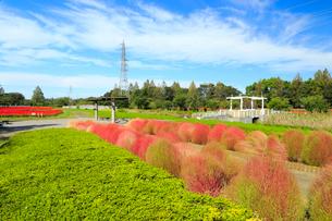 大宮花の丘農林公苑の写真素材 [FYI01751930]
