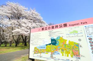 春の小金井公園の写真素材 [FYI01751936]