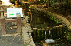 真姿の池湧水群の写真素材 [FYI01751974]