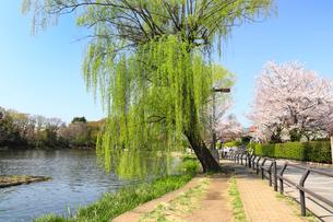 春の石神井公園の写真素材 [FYI01752040]