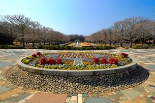 冬の昭和記念公園の写真素材 [FYI01752065]
