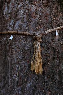 神社の御神木の写真素材 [FYI01752072]