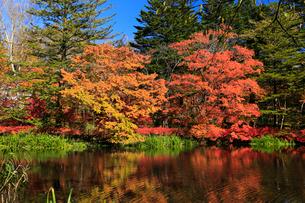 紅葉の雲場池の写真素材 [FYI01752144]