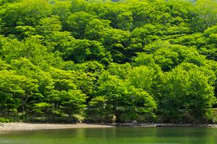 新緑と湖の写真素材 [FYI01752152]