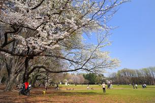 春の小金井公園の写真素材 [FYI01752155]