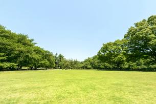 青空の芝生の公園の写真素材 [FYI01752256]