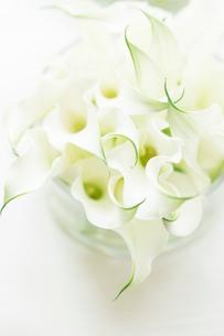 白いカラーの写真素材 [FYI01752277]
