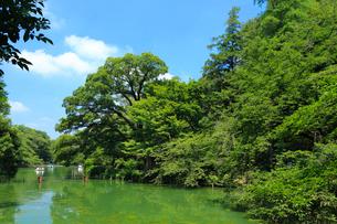 井の頭恩賜公園の写真素材 [FYI01752290]