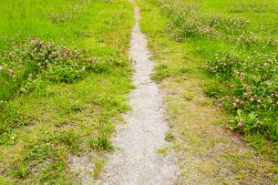 野原に伸びる一本道の写真素材 [FYI01752321]