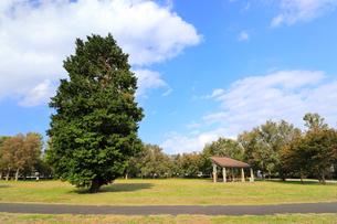 武蔵野の森公園の写真素材 [FYI01752366]