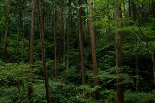 山奥の森林の写真素材 [FYI01752446]