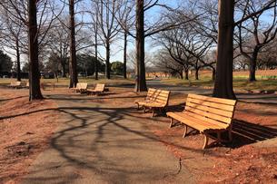 公園のベンチの写真素材 [FYI01752511]