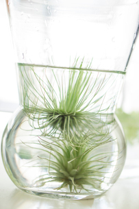 ガラスに入ったグリーンの写真素材 [FYI01752561]