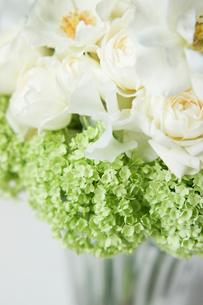 白バラとビバーナムの写真素材 [FYI01752677]