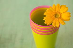 黄色のカップにさした一輪のガーベラの写真素材 [FYI01752693]