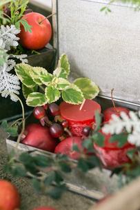 マーガレットと姫リンゴのアレンジの写真素材 [FYI01753012]