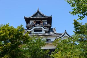 国宝犬山城 天守閣の写真素材 [FYI01753187]
