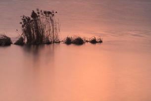 残照の湖面の写真素材 [FYI01753247]