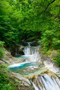 新緑の西沢渓谷の写真素材 [FYI01753282]