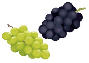 果物 ブドウ マスカットのイラスト素材 [FYI01753637]