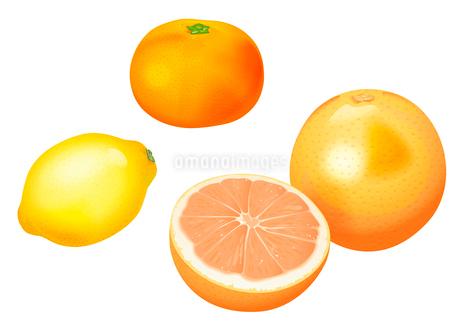 果物 グレープフルーツ レモン みかんのイラスト素材 [FYI01753645]