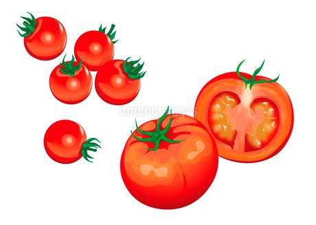 野菜 トマト プチトマトのイラスト素材 [FYI01753675]