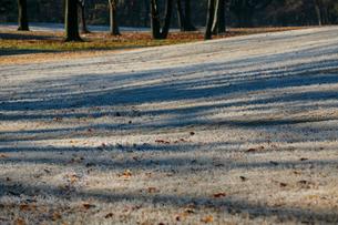 霜の降りた芝生と木の陰の写真素材 [FYI01753727]