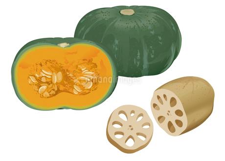 野菜 カボチャ レンコンのイラスト素材 [FYI01753758]