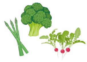 野菜 ブロッコリ アスパラ ラディッシュのイラスト素材 [FYI01753886]