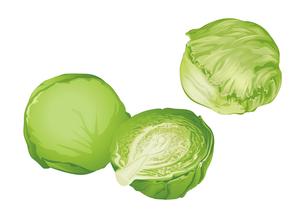 野菜 キャベツ レタスのイラスト素材 [FYI01753969]