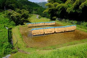 広島県北のハデ干しの写真素材 [FYI01754419]