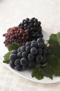 葡萄3種類の写真素材 [FYI01754503]