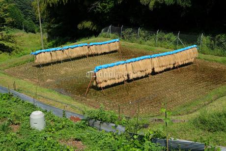 広島県北のハデ干しの写真素材 [FYI01754805]