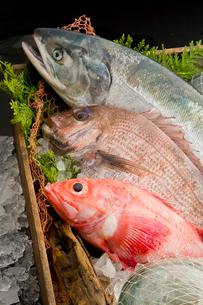 鮭、鯛、キンキの盛り合わせの写真素材 [FYI01754831]