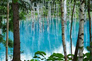 青い池の写真素材 [FYI01755446]