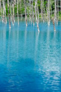青い池の写真素材 [FYI01756204]