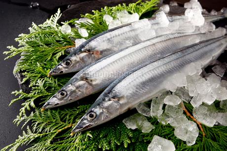 秋刀魚の写真素材 [FYI01756329]