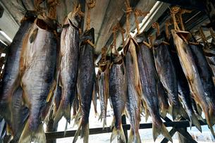 鮭を干している風景の写真素材 [FYI01756514]