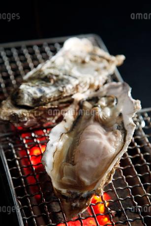 活牡蠣の炭火焼のイメージ写真の写真素材 [FYI01756581]