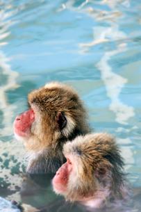 風呂に入るサルの写真素材 [FYI01756667]