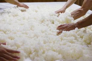 日本酒作りの麹を混ぜる工程写真の写真素材 [FYI01756982]
