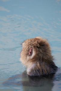 風呂に入るサルの写真素材 [FYI01757191]