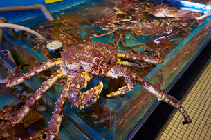 活タラバ蟹の写真素材 [FYI01757426]