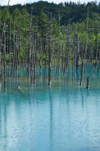 青い池の写真素材 [FYI01758270]