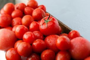 トマトイメージの写真素材 [FYI01758529]