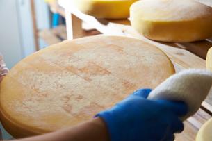 チーズを熟成している工程写真の写真素材 [FYI01759034]