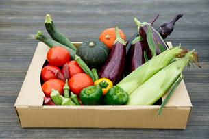 野菜盛り合わせの写真素材 [FYI01759059]
